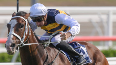 Terrific: Tom Melbourne pins his ears back for Blake Shinn in the Carrington Stakes.