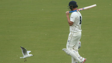 Victorian veteran Cameron White has been an inspiration for Ashes hopeful Will Pukovski.