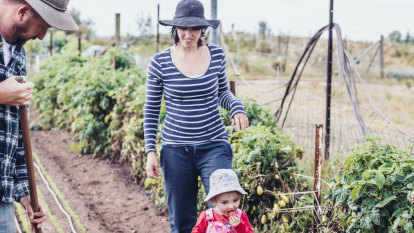 Planting above their weight: low-acreage, high-yielding farms
