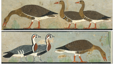 The Meidum Geese painting, with the unusual colourful birds in the lower left.