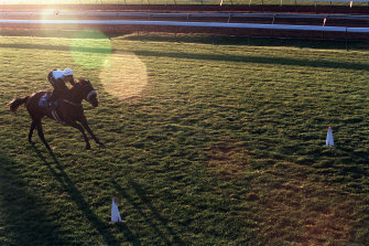 The Gold Cup over the mile headlines a bumper nine-race card at Narromine on Sunday.
