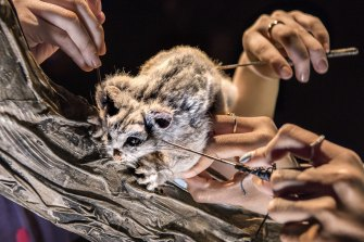 A possum forms part of the multi-sensory, puppetry-based experience.