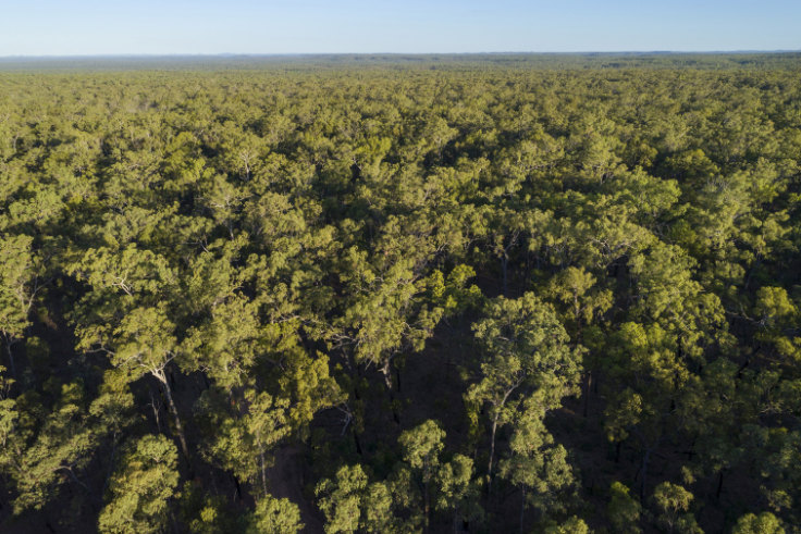 Coalition's reef advocate backs massive tree-clearing plan