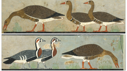 Egyptian art poses riddle for UQ scientist: Was the goose cooked?