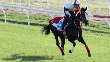 Cox Plate favourite Lys Gracieux works at Werribee.