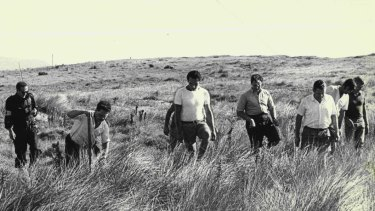 Volunteers search sand dunes near Fairy Meadow in the hunt for Cheryl Grimmer on January 14, 1970.