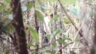 Paul Savage, a person of interest in the William Tyrrell investigation, shown in bushland at Kendall in July 2017 during a police surveillance operation.