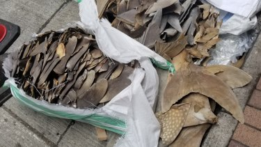 Shark fins from endangered species including whale sharks were found in a Singapore Airlines shipment from Sri Lanka to Hong Kong in May.