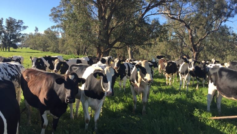 Moxey Farms, near Cowra, is turning the waste of its 6000 cows into something useful.