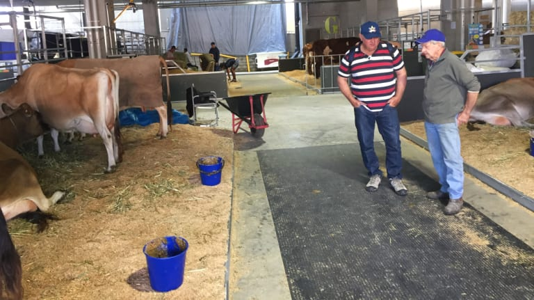 Graham Hoey from Warwick says cattle are falling over on the concrete floors of the Royal Brisbane Hospital used as the cattle enclosure for the first time.