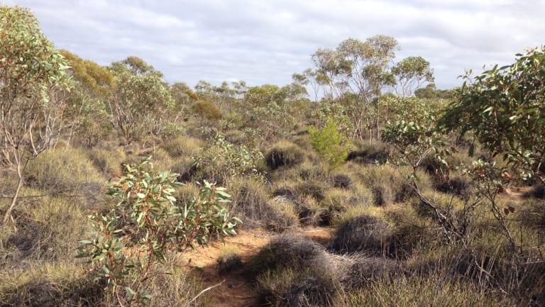 The thick bush where the team found the wren.