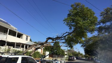 A tree on Jackson Street, Clayfield, after being cut back by Energex contractors.