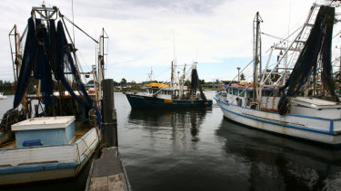 Fishing trawlers at Yamba.