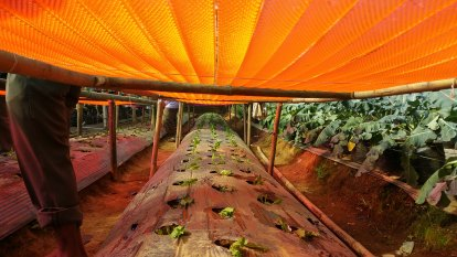The future is fertile: how Australian innovation could save farming