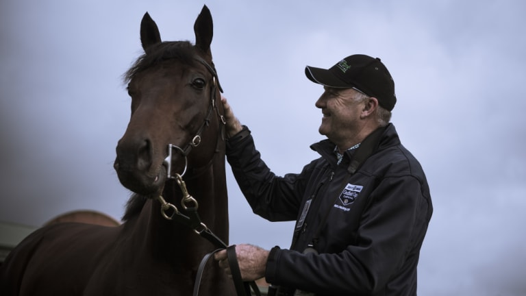 Storm warning: David Hayes believes he can cause another Caulfield Cup upset with Ventura  Storm on Saturday.