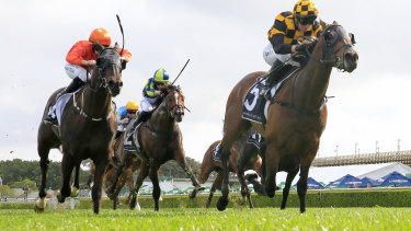 The connections of horses running in the Cox Plate carnival will be allowed on course this weekend.
