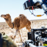 How an Aussie film starring a camel is gunning for an Oscar nomination