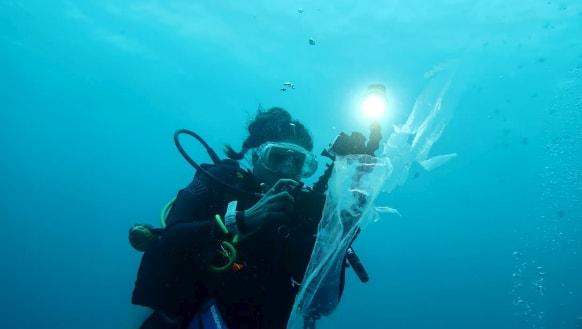 Swimming with plastic on Australia's doorstep