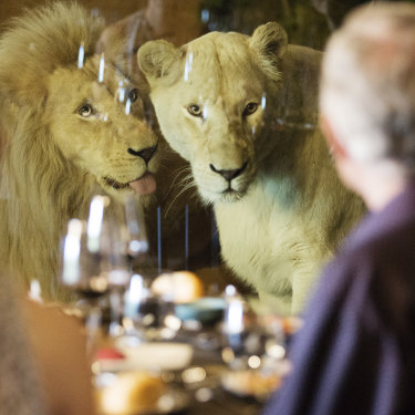Lions and tigers (and bears) at Canberra's Jamala Wildlife Lodge ... oh my!