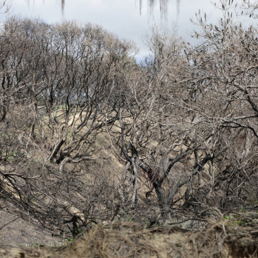 Scorched vegetation near Happy Valley.