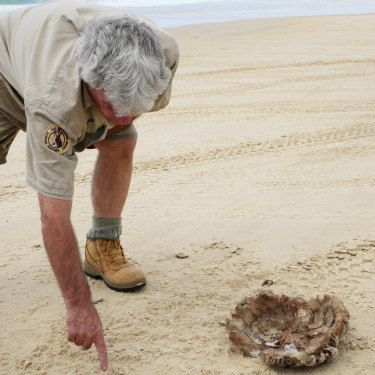 """Ray Revill, the group's wildlife adviser, inspects the apparent meal site. The hard-sand """"highway"""" can be dangerous for the island's dingoes."""