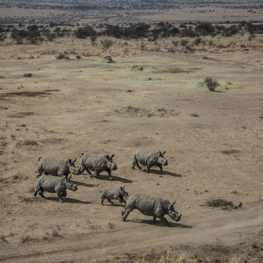 Some of Manie Van Niekerk's 32 rhinos prior to being taken to Botswana.