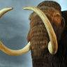 Mammoth tusk theft lands Alaskan man in jail