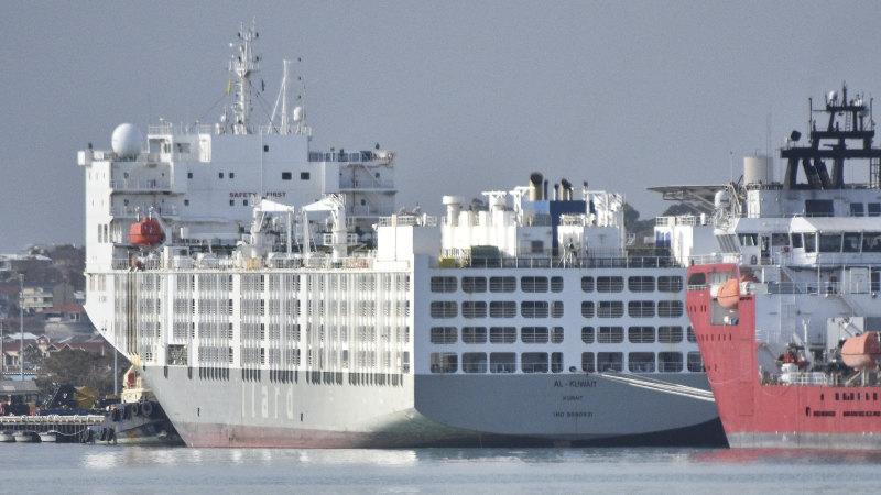 WA coronavirus LIVE: Blame game between McGowan and federal government continues over sheep ship debacle