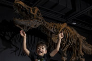 Archie Levins and his dad Andrew (right) at Australian Museum's new dinosaur exhibition.