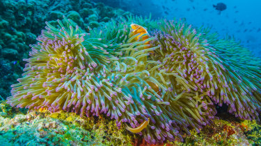 Reef Live will be broadcast from multiple sites on the Great Barrier Reef.