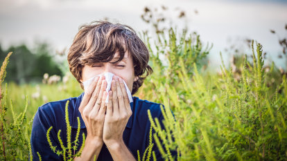 Why you get hay fever (and what you can do about it)