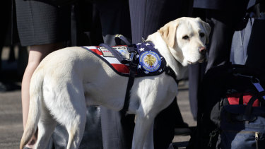 Bush's service dog stands next to Bush family members after his death.