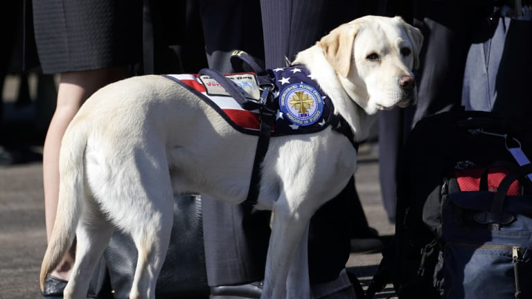 Bush's service dog stands next to Bush family members during a departure ceremony at Ellington Field on Monday.