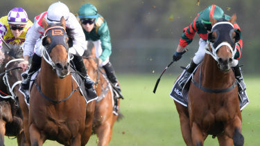 Seperate ways: The Autumn Sun, right, will contest the Caulfield Guineas while Graff, left, will go for The Everest.