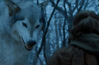 One of the fictional dire wolves featured in Game of Thrones.