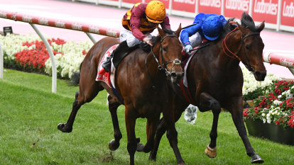 Brush or bump, controversial finish was befitting of Cox Plate legend