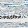 'Like listening to the song of the earth': New Antarctica exhibit opens