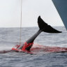 Japan's bid to end commercial whaling moratorium defeated