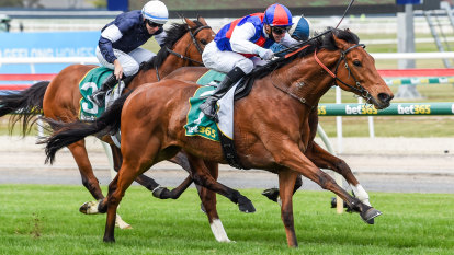 Steel Prince claims Geelong Cup in hopes of second Melbourne Cup tilt