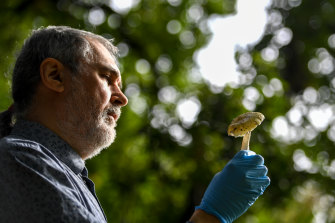 Royal Botanic Gardens principal research scientist in mycology Tom May with poisonous mushrooms.