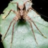 Queensland-discovered spiders named after Mick Fanning, Jack Nicholson recognised