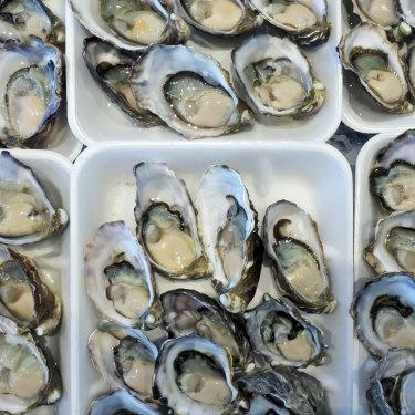 Sydney rock oysters.