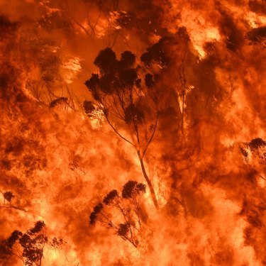Flames crown into the treetops during a ferocious fire season.
