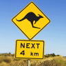 Animal collisions spike on Queensland roads