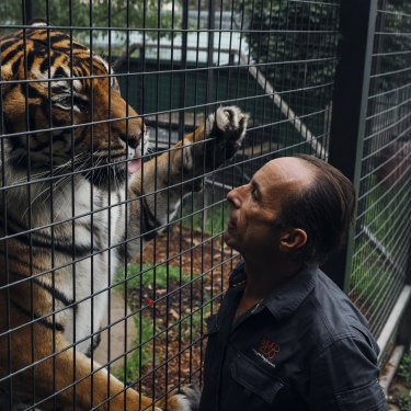 "Kinwah the tiger, now 11, was raised by operations manager Clive Brookbanks. ""I'm his world,"" Brookbanks says. ""And he's mine."""