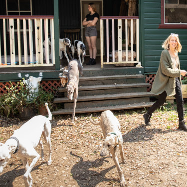 Lisa White, who founded the Friends of the Hound charity after discovering how many racing greyhounds were killed each year, with canine friends at her property in northern NSW.