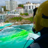 The search for a possible missing swimmer continues at  Bondi.  Lifesaver21 has dropped sea marker dye into the water at the spot where the swimmer was last seen to confirm speed and direction of the current.
