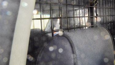 The inside of the vehicle holding serial killer Ivan Milat as it leaves the Prince of Wales Hospital on Tuesday.