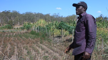 Sylvester Bandyatuyaga looks over the dying crops at Riverview Community Garden.