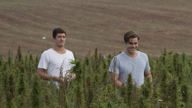 Nathan McNiece and Tim Crow are growing legal food grade hemp.